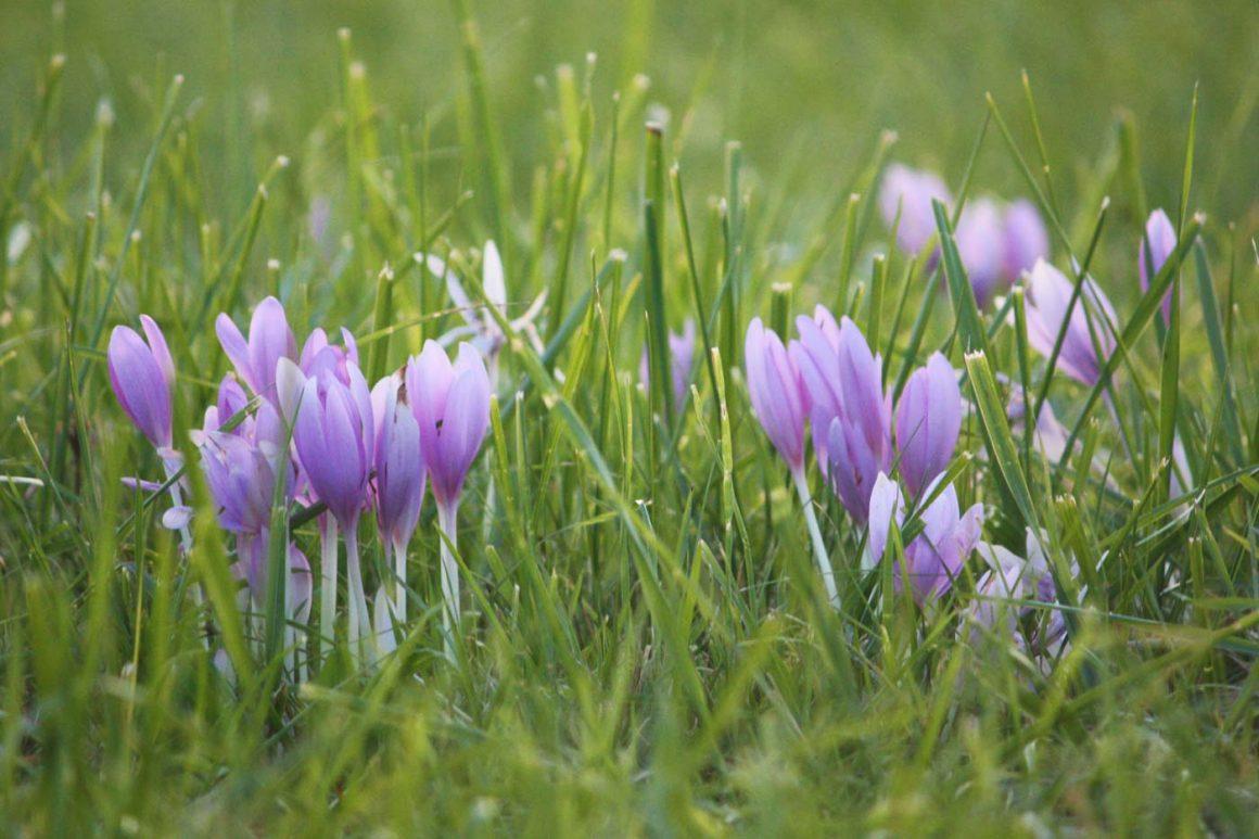 Frühlingserwachen am Bodensee